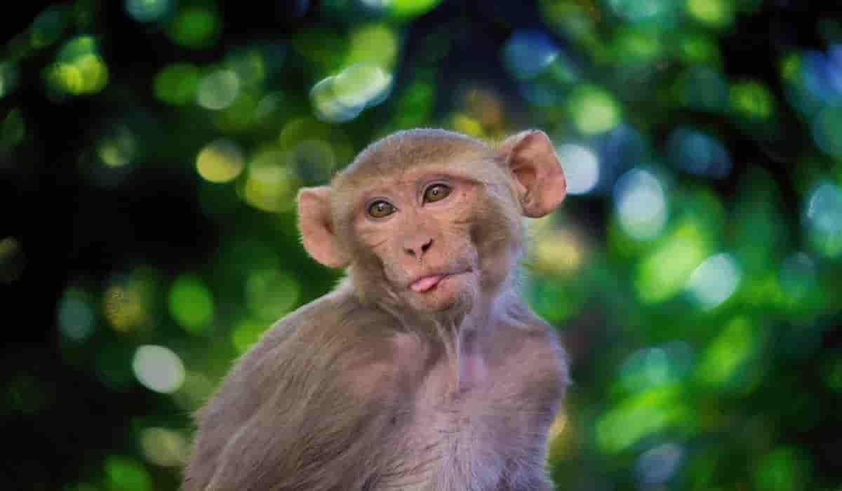 comprar mono en españa